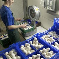Vos champignons bvba - Inpakken