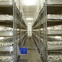 Vos champignons bvba - Productieproces